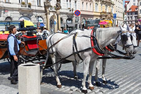 PRAGUE - CZECH REPUBLIC, AUGUST 14 : Two grey horses hitching up and their coachman, August 14, 2017