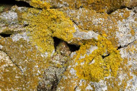 Lichen on rocks on the coast of Brittany Reklamní fotografie