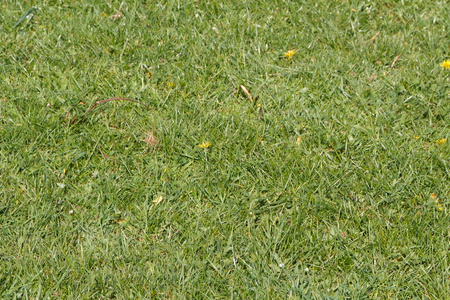 Grass in a garden during spring
