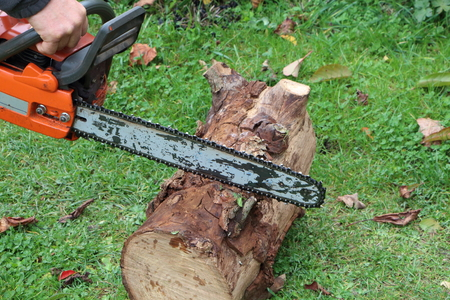 Lumberjack cutting wood with an orange chain saw in a garden