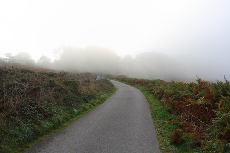 Road in the fog during autumn in the countryside Stockfoto
