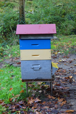 Hive in a forest of Brittany during autumn