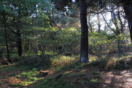 Undergrowth in Brittany during autumn