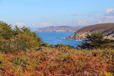 Coast in Brittany with dry ferns during autumn