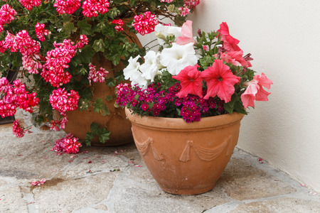 Planter with pink and white petunia flowers in a garden during spring Standard-Bild - 124986860