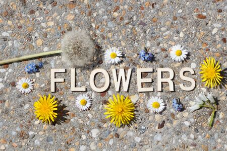 Flowers written in wooden letters and some flowers on stone pavement