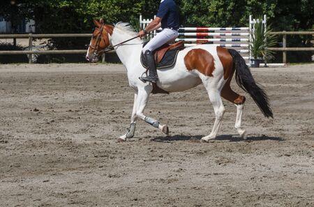 Man riding a bay pinto horse at trot