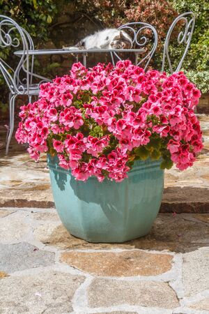 Planter with pink geranium flowers