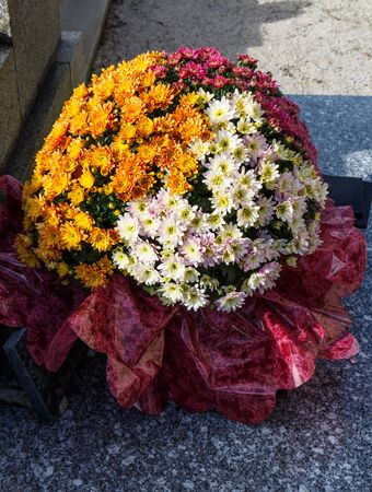 Chrysanthemum plant on a tombstone for All Saints Day
