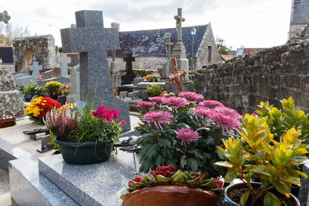 Chrysanthemum plants on a tombstones for All Saints Day in Brittany