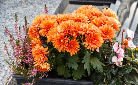 Orange chrysanthemum plant on a tombstone for All Saints Day Imagens - 132682185
