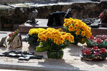Yellow chrysanthemum plants on a tombstone for All Saints Day Imagens