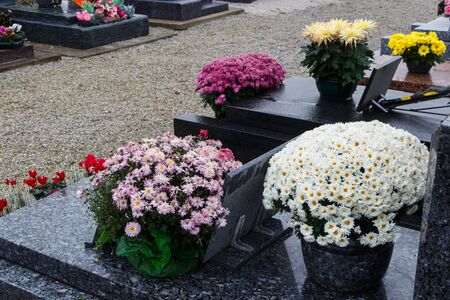 Purple and white chrysanthemum plants on tombstones for All Saints Day Imagens