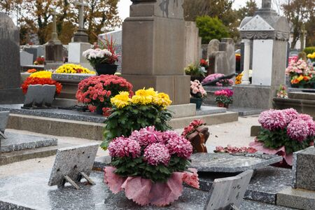 Chrysanthemum plants on tombstones for All Saints Day Imagens - 132057194