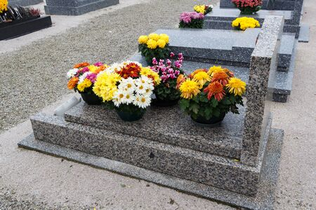 Chrysanthemum plants on tombstones for All Saints Day Imagens - 132056206