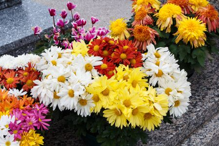 Chrysanthemum plants on tombstones for All Saints Day Imagens - 132057323