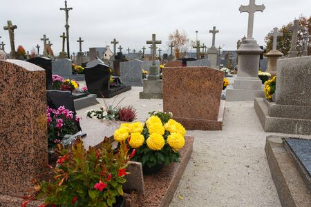 Yellow chrysanthemum plants on tombstones for All Saints Day