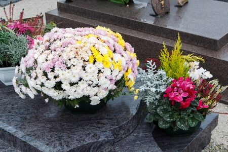Chrysanthemum plants on tombstones for All Saints Day Imagens - 132057005