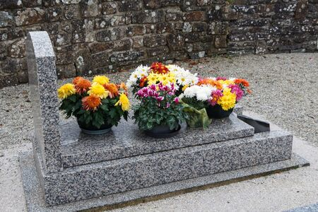 Chrysanthemum plants on tombstones for All Saints Day Imagens - 132057793
