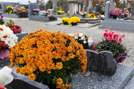 Chrysanthemum plants on tombstones for All Saints Day Imagens - 132057124