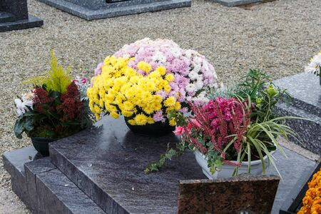 Yellow and pink chrysanthemum plants on tombstones for All Saints Day