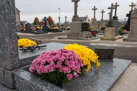 Chrysanthemum plants on tombstones for All Saints Day Imagens - 132126392