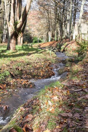 Stream and forest during autumn with lots of dead leaves on the ground