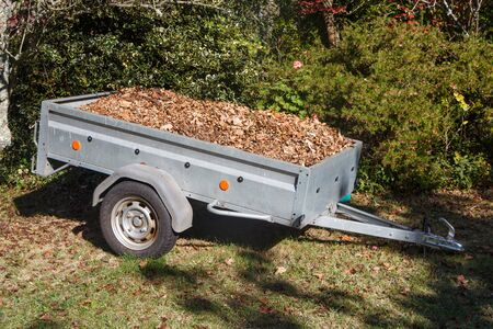 Trailer full of dead leaves after cleaning under the trees during autumn Imagens - 133278420