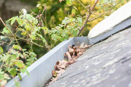 Dead leaves in gutter keeping rain from flowing