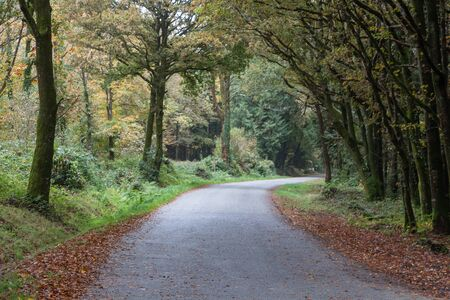 Road in a forest in Brittany during autumn Imagens
