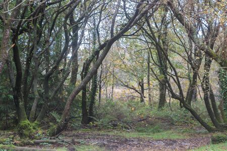 Undergrowth in a forest in Brittany during autumn Imagens