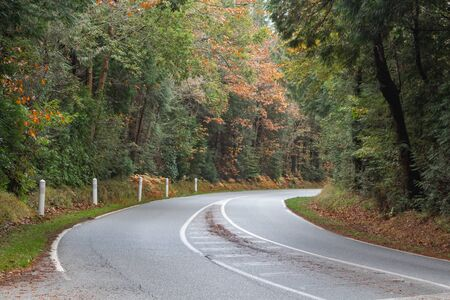 Road with a bend in autumn