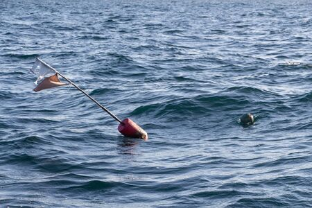 Buoys for lobster pot near the coast in Brittany