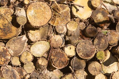 Heap of wood logs in a garden