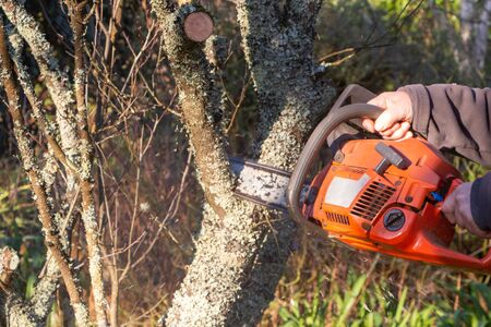 Lumberjack cutting the branch of a tree with a chain saw during winter
