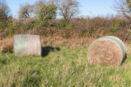 Hay bales in the field of a farm