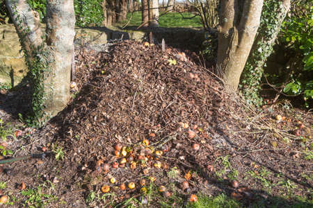 Heap of compost made with dead leaves and rotten apples in a garden