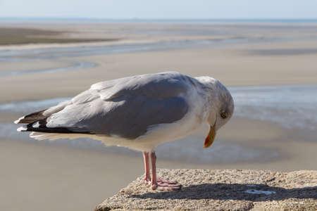 Seagull on a wall near the coast