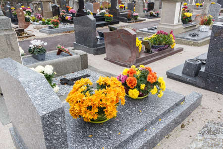 Chrysanthemum plants on tombstones for All Saints Day