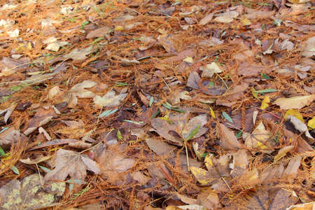 Dead leaves on the ground in a forest during autumn Stock fotó
