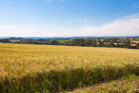 Field of barley and landscape in Brittany