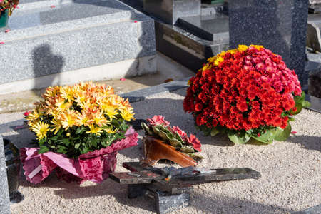 Chrysanthemum plants on a tombstone for all Saints Day