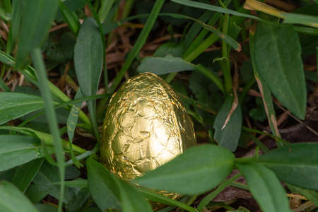 Chocolate egg wrapped in golden paper hidden in grass for Easter