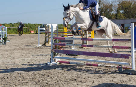 Woman and white horse jumping a fence Stock fotó
