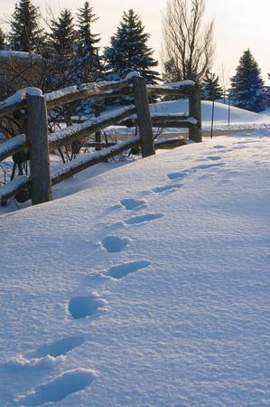 snow falling: Percorso di neve Archivio Fotografico