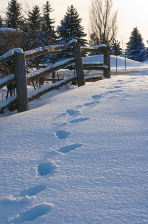 Snow Path photo
