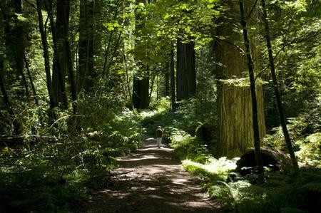 Forest path Archivio Fotografico