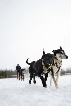 Dogsled competition photo