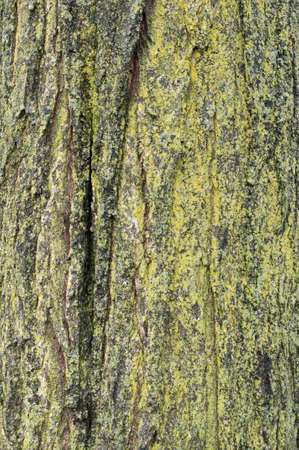 boomschors close up en mos