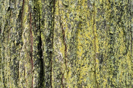 tree bark close up and moss